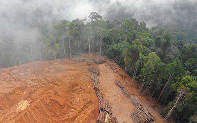 Investors Concerned That Brazil is Missing the Forests for the Trees