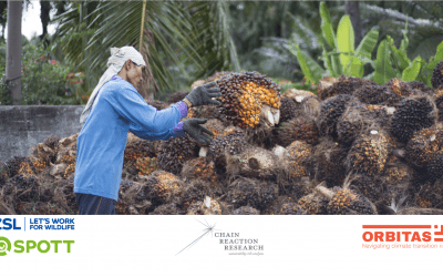 Evaluating the Universe of Risks in Indonesia Palm Oil
