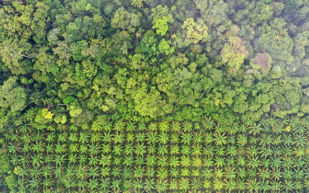 Climate Transition Risk Analyst Brief: Indonesian Palm Oil
